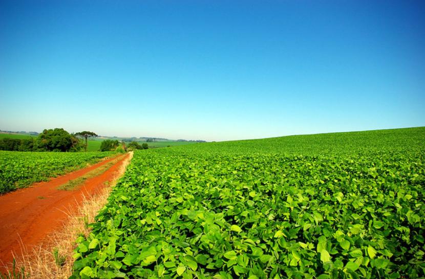 Projeto de aquisição de terras por estrangeiros ainda causa insegurança jurídica